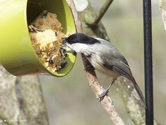 Click on the photo to find out how to make unique birdfeeders and bird baths to attract wild birds.