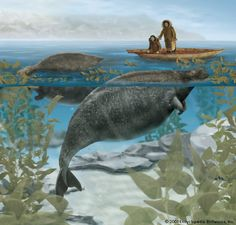 2 years ago (24 notes)  #sea creatures  #manatee    View high resolution   uncertaintimes:    rhea137:    Steller's sea cow (Hydrodamalis gigas) is a large extinct sirenian mammal.