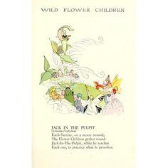 Wild Flower Children c1918 Jack in the Pulpit Canvas Art - Janet Laura Scott (18 x 24)