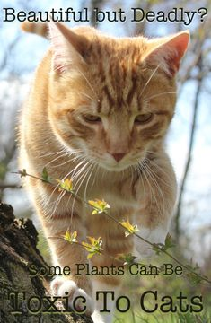 A Complete Guide To Poisonous Plants For Cats