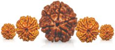 Press Release Watch: Rudraksha Exhibition in Bangalore