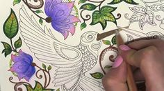 Secret Garden Coloring Book | Birds