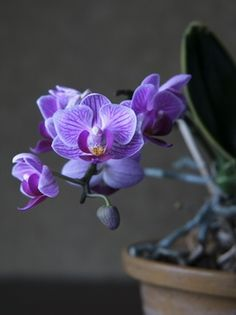 Orange Orchid, Purple Orchids, White Orchids, Moth Orchid, Phalaenopsis Orchid, White Flowers, Beautiful Flowers, Orchid Arrangements, Flower Wallpaper
