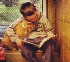 Campanha de incentivo à leitura e à adoção de animais abandonados faz sucesso com fotos de crianças 'lendo para gatos'