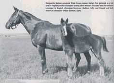 Marguerite, shown with Gallant Fox, is one of the featured mares in Edward Bowen's Matriarchs of the Turf