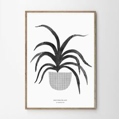 POTTED PLANT by SAMA