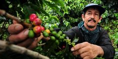 According to a new report from Bioversity International, 940 cultivated species are already ...