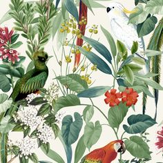 This fabulous tropical design from Ugepa features vibrant exotic birds such as parrots and cockatiels contrasting against a fresh light background. Parrot Wallpaper, Paradise Wallpaper, Tropical Wallpaper, Luxury Wallpaper, Contemporary Wallpaper, White Wallpaper, Wall Wallpaper, Wallpaper Roll, Motif Tropical