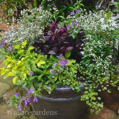 Container Garden Designs from horticulturist Nancy Wallace, who designs more than 300 containers a year for clients in Atlanta-Metro area.