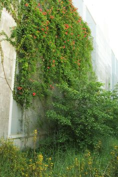 greenscreen® is a complete trellis system for designing green walls and green facades.