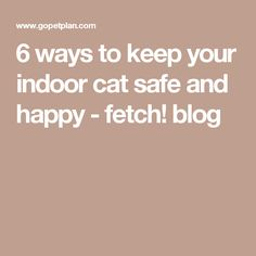 6 ways to keep your indoor cat safe and happy - fetch! blog