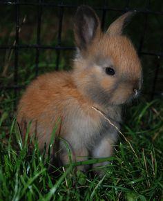 a blog of just cute bun pics!