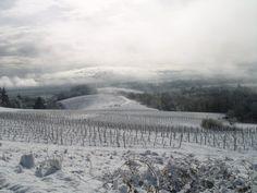 Oregon USA Snow on wineyards