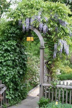 Love the trellis and Wisteria!