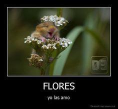 objeto directo FLORES-yo-las-amo