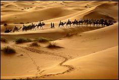 Caravana de camellos. Erg Chebbi. Marruecos