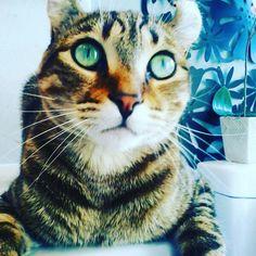 Mon chat!!!!!!!