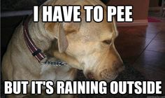 Hee hee - this SO reminds me of my dad's (late) dog Zachary. He'd dance by the door like he had to go outside this instant until he realized it was cold and rainy outside. Then, he'd do a u-turn back into the house if I didn't cut him off.