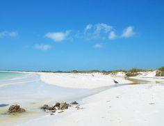 ~Honeymoon Island~Dunedin, Florida~ - Beaches Wallpaper ID 368165 - Desktop Nexus Nature Places In Florida, Florida Beaches, Florida Blue, Vacation Destinations, Vacation Spots, Vacations, Dunedin Florida, Honeymoon Island, Florida Travel