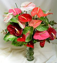 Anthuriam Flowers