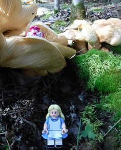 Alice in Wonderland @britslego instagram #Lego #aliceinwonderland #greatoutdoors #hiking #forest #mushrooms #moss #afol #whitecourt #kidneylake #naitforestry #travelalberta