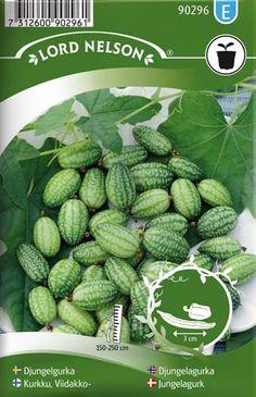 Gurkliknande grönsak med mexikanska anor. Ger rikligt med 3cm randfläckiga frukter. Lämplig i sallad, inläggning och wok. Har ett klängande växtsätt som kräver uppbindning. Toppas vid 1,5-2m höjd. Nyp