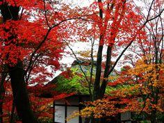 京都 小倉山 常寂光寺。仁王門。茅葺の屋根に苔。