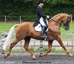 Golden Edge Sporthorses - Treliver Decanter