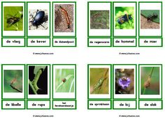 Insecten downloads - Juf Sanne Learn Dutch, Montessori, Learning, School, Projects, Google, Ideas, Insects, Animaux