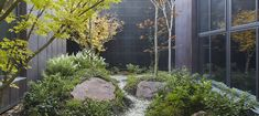 Rock garden designed by B.E Architecture to create a verdant outlook from the adjacent desk in the interiors Rock Garden Design, Internal Courtyard, Regional, Brisbane, Landscaping, Desk, Interiors, Studio, Architecture