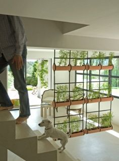 hanging plants next to the stairs