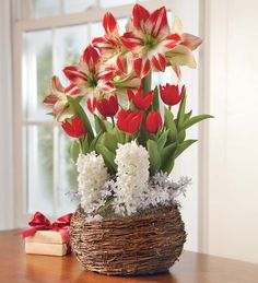 Amaryllis, Tulip And Hyacinth Noel Gift Garden - Available To Ship Beginning November 19th