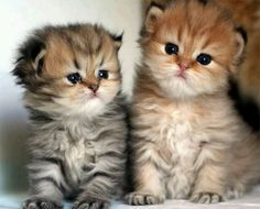 """We quickly discovered that 2 kittens were much more fun than one."" —Alan Lacy 