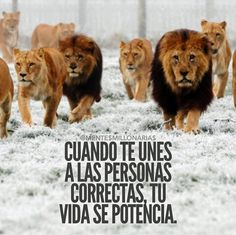 phresas Inspirational Phrases, Motivational Phrases, Best Quotes, Love Quotes, Millionaire Quotes, Spanish Quotes, Spanish Memes, Meaningful Words, Inner Peace