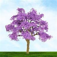 Purple Jacaranda,MP Scenery Products