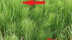 Toto nie je burina: Ak ju máte na záhrade, mali by ste spozornieť, je to hotový poklad!