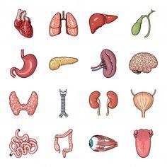 Anatomy Organs, Human Anatomy Drawing, Body Anatomy, Anatomy And Physiology, Printable Stickers, Cute Stickers, Human Body Drawing, Human Body Organs, Medical Icon