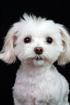 Como tirar fotos legais do seu cachorro ~ Cala a boca e clica!