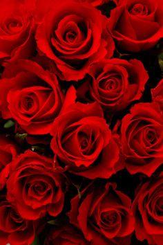 Kuvahaun tulos haulle roses