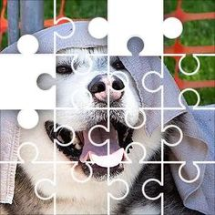 Dog Wet Towel Jigsaw Puzzle, 67 Piece Classic. Dog cooling off under a wet towel on a hot Fairly easy puzzle. It has lots of patterns and textures.
