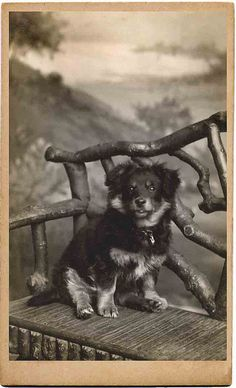 Vintage photo, puppy on a bench