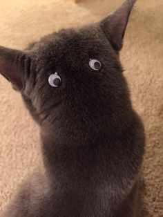 goggly eyes on the back of your cat.