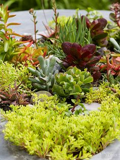 Succulents are marvels of nature that store extra water in their leaves, stems, or roots. Because they have the reputation for growing in arid conditions, many people fail to realize that when we bring them into our home and