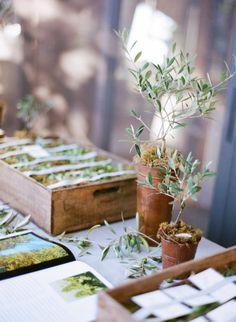 Petits oliviers
