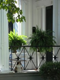 "the adventures of tartanscot™: ""A Good Southern Porch . . . """
