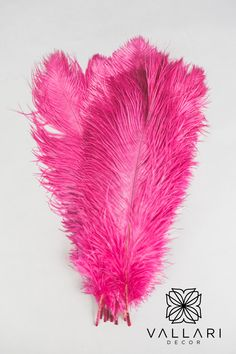 "These ostrich feathers are wide and fluffy, they make a great addition to craft pieces. They are measured from quill to tip. The 14-16"" size is also the best for those looking to make feather centrepieces (in a 24"" vase). I would recommend 15-25 feathers per centrepiece. Anything less then that makes it a bit bare -- This depends on how tall the vase is as well. ✨Follow us on social media!✨ 👉Instagram - @VallariDecor 👉Pinterest - @VallariDecor 👉Facebook - @VallariDecor Cylinder Vase Centerpieces, Feather Centerpieces, Diy Centerpieces, Centrepieces, Ostrich Feathers, Quilling, Hot Pink, Social Media, Events"