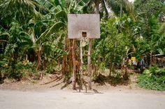 lost hoops - palm tree basketball backboard