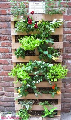 Vertical gardening with up-cycled forklift pallets.