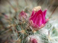 #macro #plant #flower #cactus