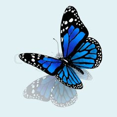 butterflies blue and green - Google Search